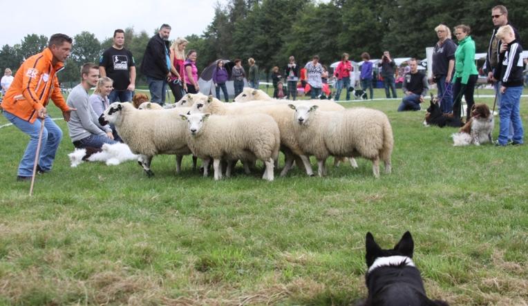 En het was even spannend, lopen de dames tussen zoveel roofdieren door...